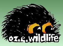 OZe Wildlife - Surfers Paradise Gold Coast
