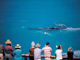 Whale Watching At Head Of Bight - Surfers Paradise Gold Coast