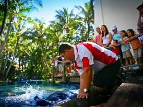 The Living Reef on Daydream Island - Surfers Paradise Gold Coast