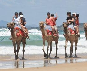 Camel Rides with Coffs Coast Camels - Surfers Paradise Gold Coast