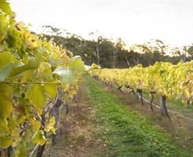 Harcourt Valley Vineyards - Surfers Paradise Gold Coast