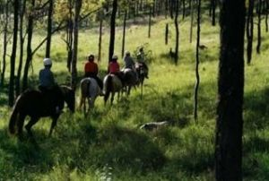 Hunter Valley Horse Riding and Adventures - Surfers Paradise Gold Coast