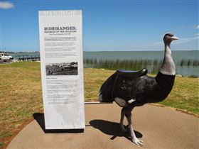 Birdman of the Coorong - Surfers Paradise Gold Coast
