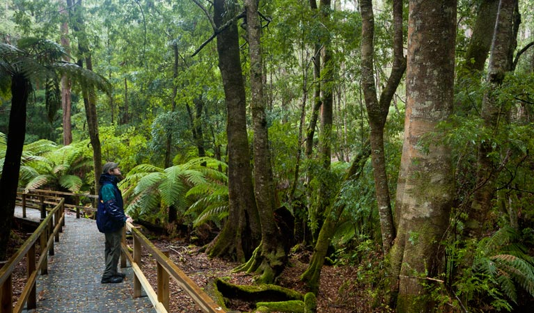 Monga National Park - Surfers Paradise Gold Coast