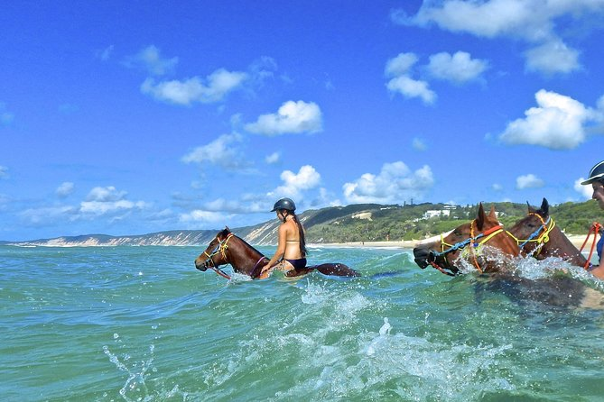 Horse Swimming Ride from Rainbow Beach - Surfers Paradise Gold Coast