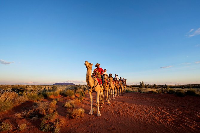 Uluru Camel Express Sunrise or Sunset Tours - Surfers Paradise Gold Coast