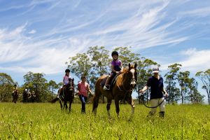 Port Macquarie Horse Riding Centre - Surfers Paradise Gold Coast