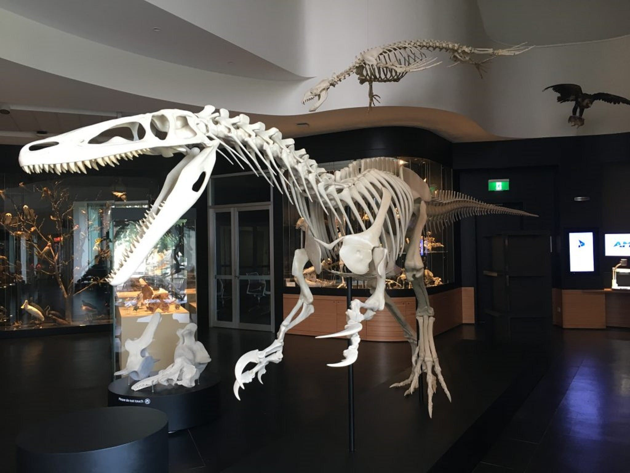 UNE Natural History Museum - Surfers Paradise Gold Coast