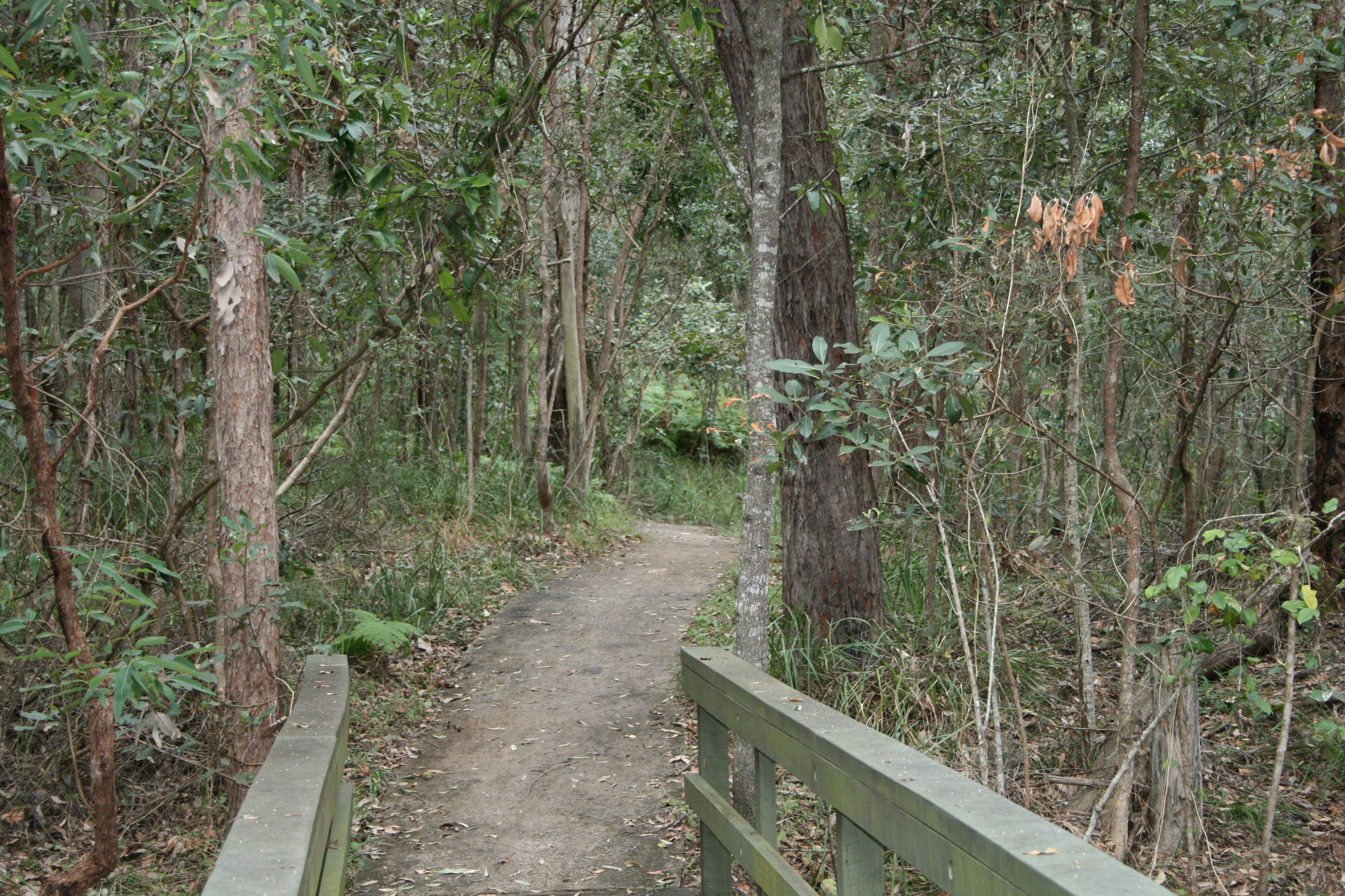 Springwood Conservation Park - Surfers Paradise Gold Coast