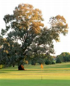 Cowra Golf Club - Surfers Paradise Gold Coast