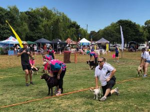 Dogs in the Park Orange - Surfers Paradise Gold Coast