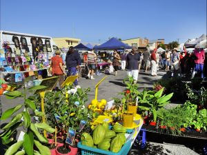Maclean Community Monthly Markets - Surfers Paradise Gold Coast