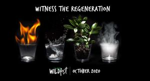 Wildfest - Annual Festival - Surfers Paradise Gold Coast